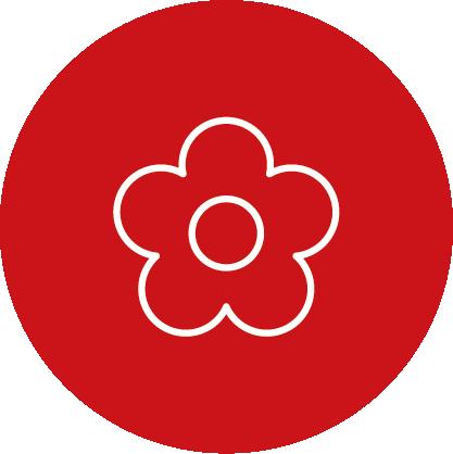 Blumen von REWE